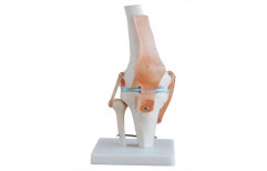 Knee Joint Life-Size PVC XC-RH-111 by Rizen Healthcare