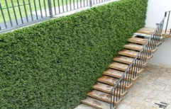 Outdoor Artificial Grass Wall by Royal Interiors