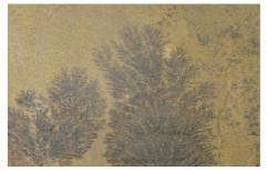 Fossil Mint Sandstone by Priyanka Construction