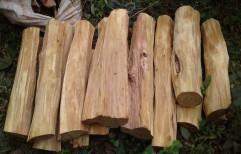 Whiteish Yellow Sandalwood logs