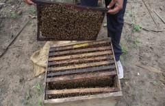 Pine wood Rectangular Beehive Box With Honey Bee