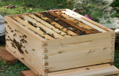 Wooden Bee Hive Box