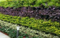 Compost,soil & coco bit Vertical Natural Garden & Green Wall, For Outdoor & Indoor