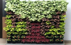 Live Vertical Green Wall, Packaging Type: Roll
