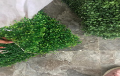 Green Plastic Artificial Hangings Garden, For Decoration