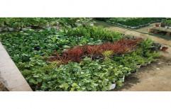Tissue Culture Plant Green Natural Vertical Garden